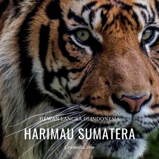 hewan langka di indonesia (15)