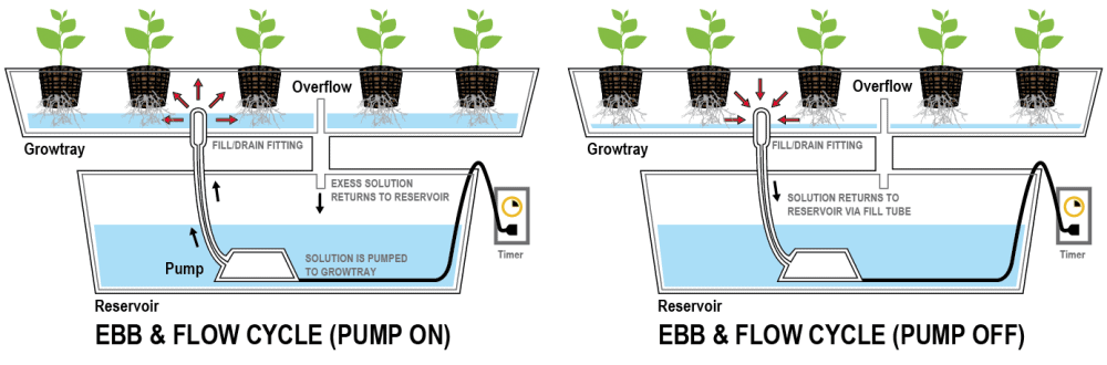 Ebb and Flow, sumber: sdhydroponics.com