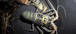 Lobster Bambu