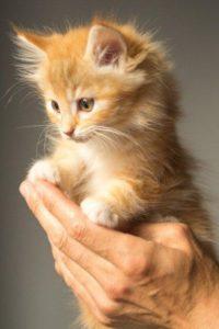 memberikan vaksinasi kucing