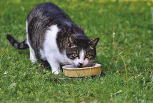 memberikan makan kucing