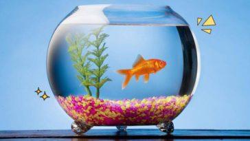 Jenis Ikan Hias paling cantik