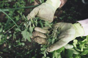 sarung tangan untuk berkebun