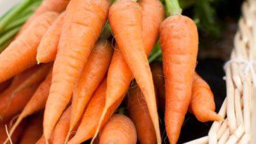 manfaat wortel bagi kesehatan